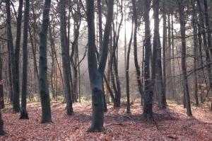 Паническо разстройство, фобии, страхове - хипнозата помага